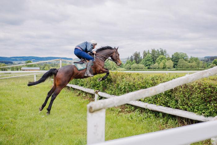 Dostihové závodiště ve Světlé Hoře využíváme ve skokovém tréninku překážkových koní
