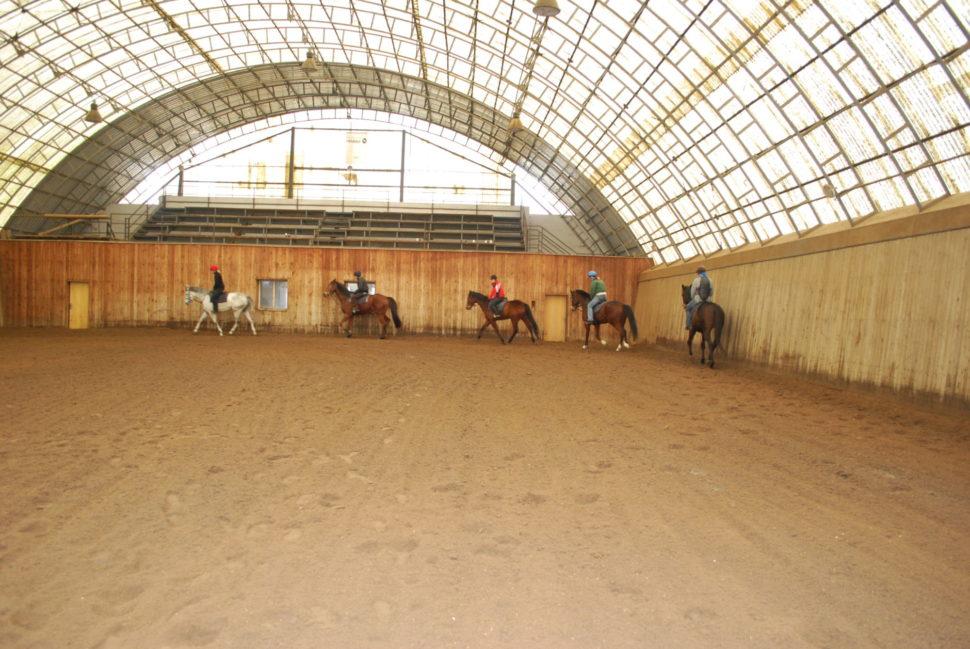 Trénink dostihových koní vhale ve Světlé Hoře