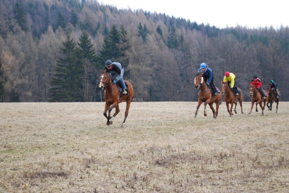 Skupina dostihových koní cválá polouce ve Světlé Hoře