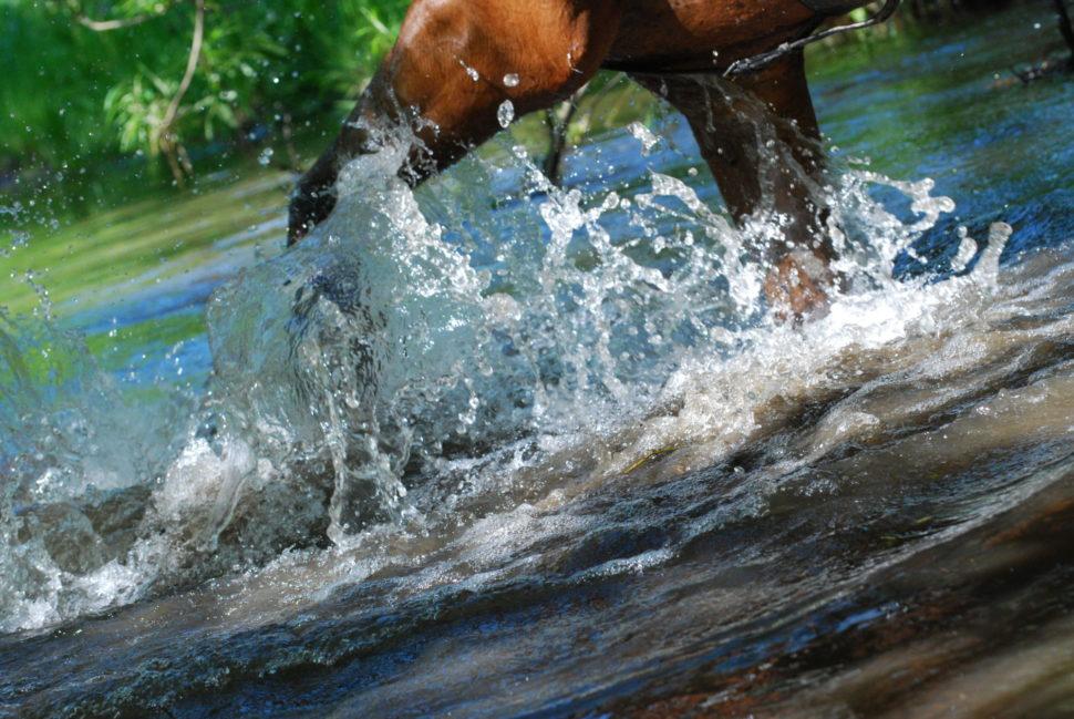 Kůň hrabe vodu vpotoku ve Světlé Hoře