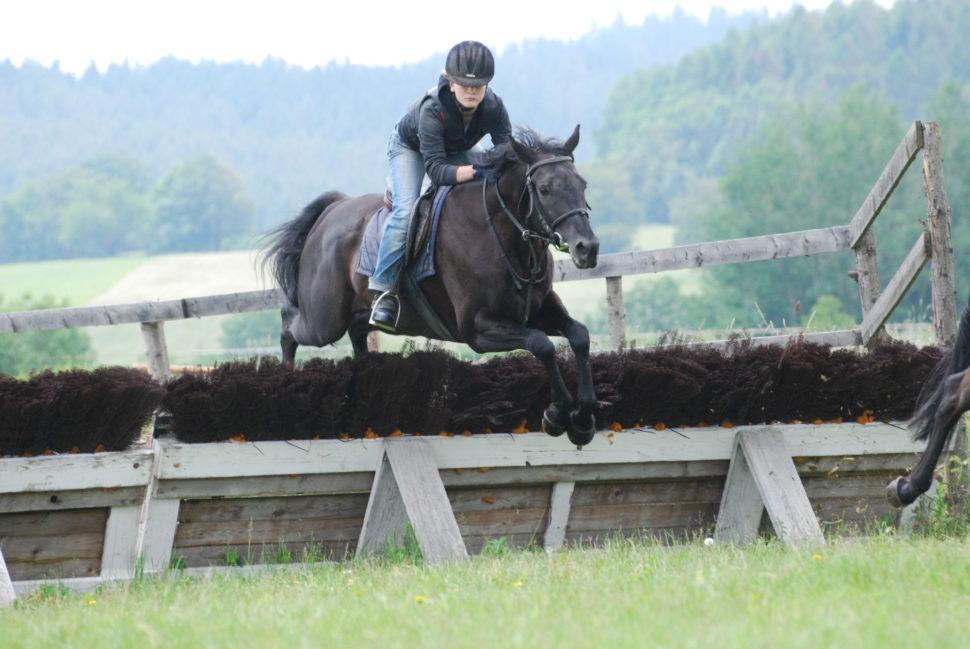 Skokový trénink koní nadostihové dráze ve Světlé Hoře