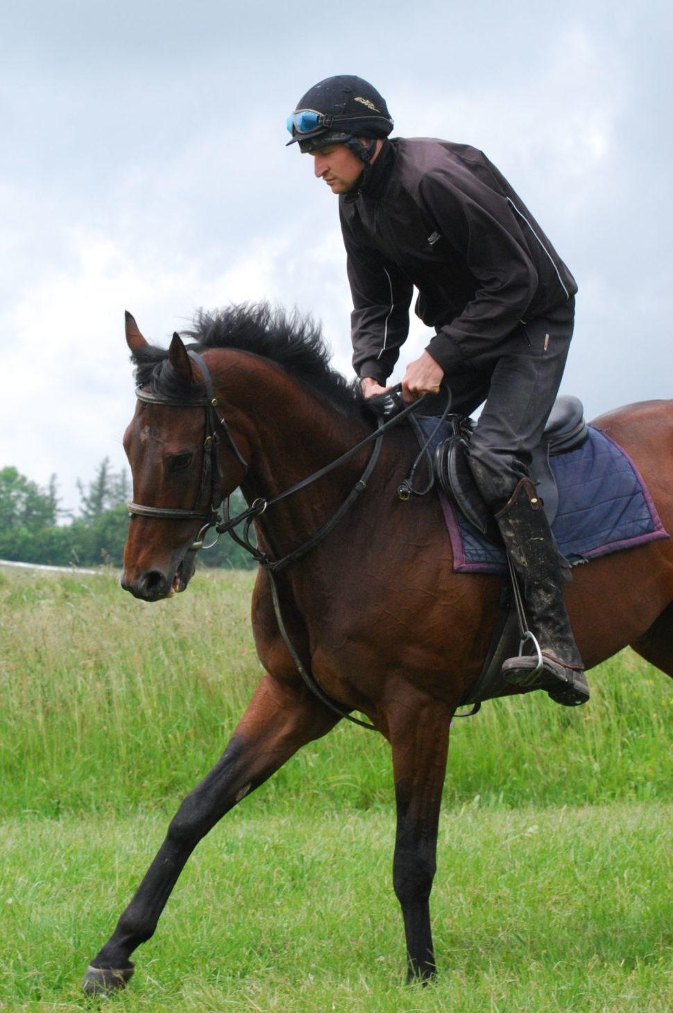 Trénink koně nadostihové dráze ve Světlé Hoře