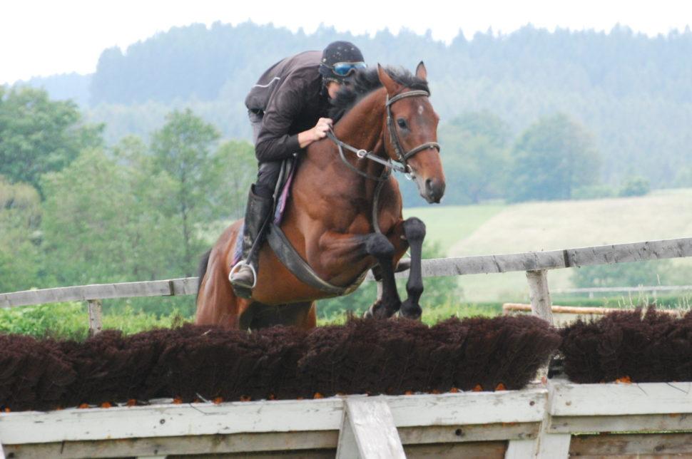 Skokový trénink koně nadostihové dráze ve Světlé Hoře