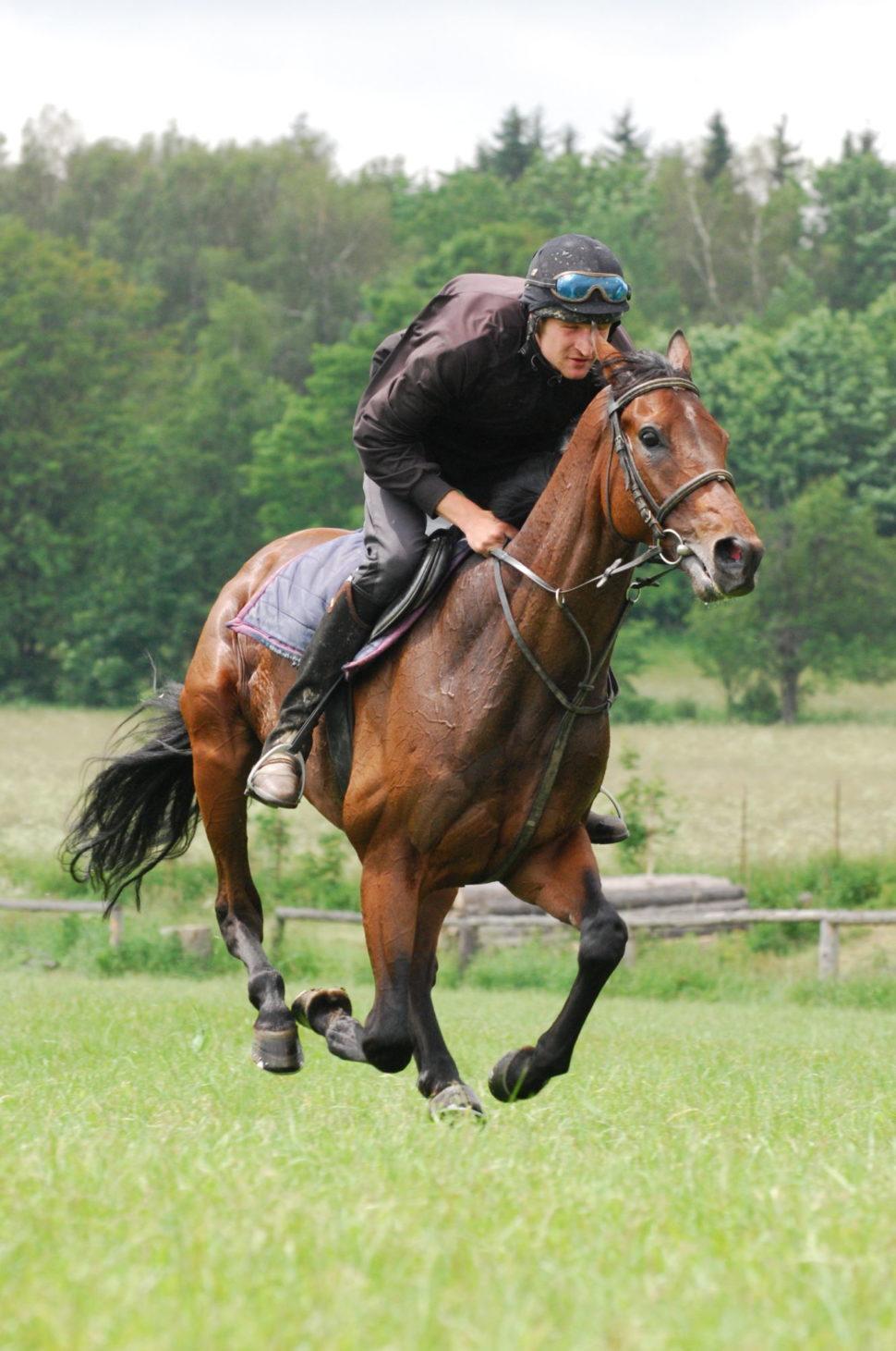 Cvalový trénink koně nadostihové dráze ve Světlé Hoře