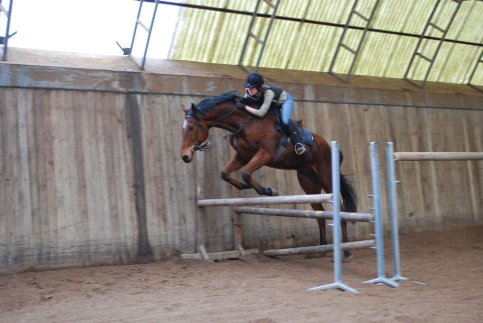 Skokový trénink koní vkryté hale ve Světlé Hoře