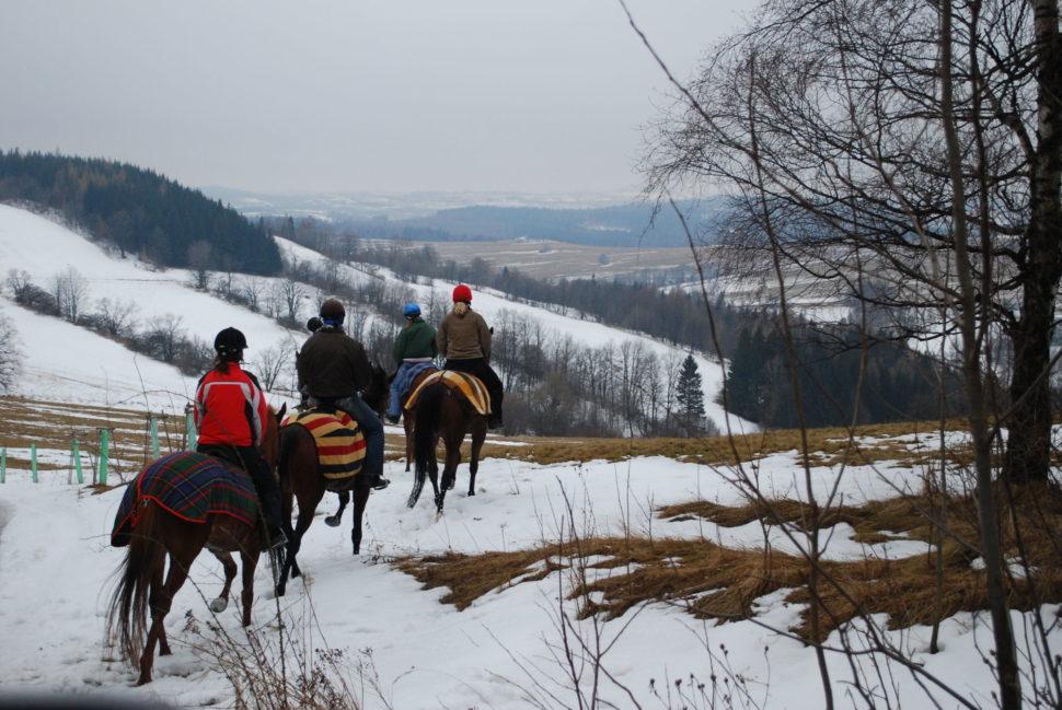 Dostihoví koně se vracejí zpráce naAnnabergu