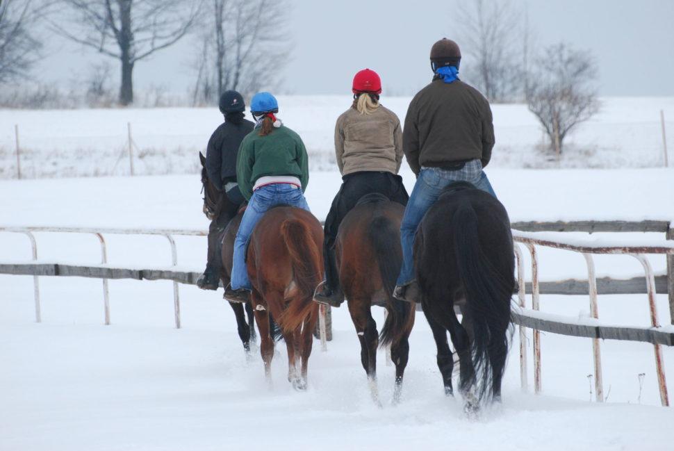 Trénink dostihových koní nasněhové pokrývce ve Světlé Hoře